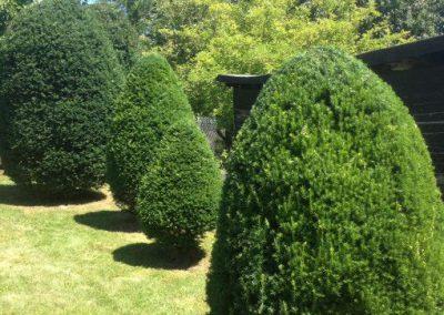 Zurückschneiden von Bäumen und Sträuchern